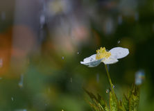 Pluie photo libre de droits