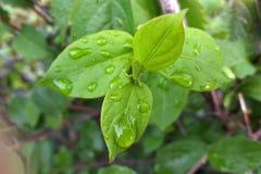 Pluie au-dessus des feuilles Photos stock