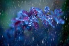 Pluie bleue dans le jardin d'automne Images libres de droits