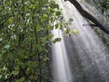 Pluie, brouillard et rayons de soleil dans le forrest Image libre de droits