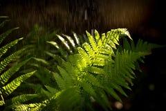 Pluie d'été Image libre de droits
