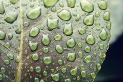 Pluie d'été sur la feuille Photo stock