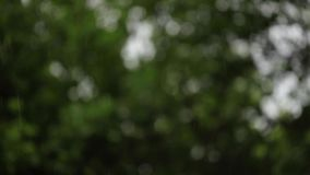 Pluie d'été sur le fond des arbres verts - macro tir, fond brouillé banque de vidéos