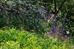 Pluie d'été un jour ensoleillé dans le jardin Photo stock
