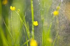 Pluie dans le jardin photographie stock
