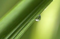 pluie de baisse Photo libre de droits