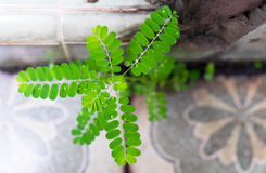 Pluie de baisse de l'eau sur la feuille verte Photos stock