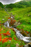 pluie de cascade Photo stock