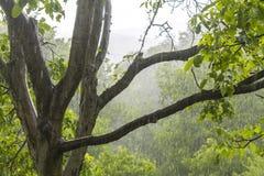 Pluie de douche dans la forêt Images stock