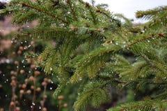 Pluie de douche de ressort Photo libre de droits