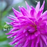 pluie de fleur Images stock