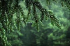 Pluie de forêt Photographie stock