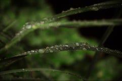 Pluie de petit morceau d'herbe photographie stock