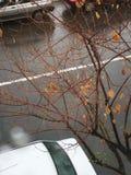 Pluie de ressort pendant la nouvelle année photo stock