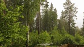 Pluie de vue avec la grêle du paysage rocheux de nature dans de hauts pins verts de forêt sur le fond de ciel de tonnerre banque de vidéos