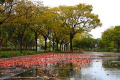 Pluie et feuilles tombées d'érable Photo libre de droits