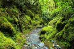 Pluie Forest New Zealand de vert de Bush Images stock