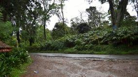Pluie Forest Road Images libres de droits