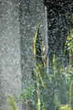Pluie lourde d'été photographie stock libre de droits