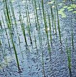 Pluie sur l'étang Photo stock