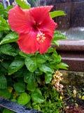 Pluie sur la fleur Images stock