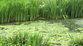 Pluie sur le lac en parc clips vidéos