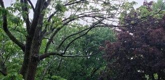 Pluie sur le tree& x27 ; s photographie stock libre de droits
