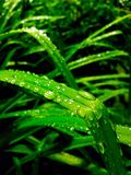 Pluie sur le vert Photos libres de droits
