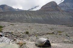 Pluie sur les roches Photo stock