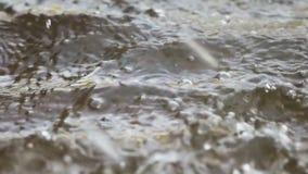 Pluie tombant vers le bas sur l'eau banque de vidéos