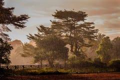 Pluie tropicale Photographie stock libre de droits