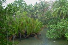 Pluie tropicale au-dessus de la rivière fonctionnant par la forêt tropicale Photographie stock libre de droits