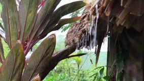 Pluie tropicale lourde Un vieux cottage couvert de chaume dans la jungle entourée par les arbres et les palmiers en bambou douche clips vidéos
