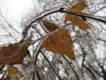pluie verglaçante Images libres de droits