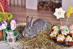 Pluizig foxy konijn met paaseieren Stock Foto