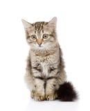 Pluizig grijs mooi katje Op witte achtergrond Stock Afbeelding