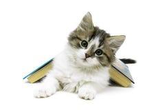 Pluizig katje en open die boek op witte achtergrond wordt geïsoleerd Stock Foto's