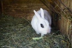 Pluizig konijn die groene salade in zijn blokhuis in een landbouwbedrijf eten royalty-vrije stock foto's