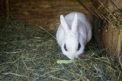 Pluizig konijn die groene salade in zijn blokhuis in een landbouwbedrijf eten stock afbeelding