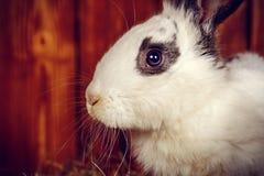Pluizig Pasen-konijntje stock fotografie