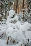 Pluizig sneeuw behandeld Kerstmisbos royalty-vrije stock foto's