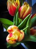 Pluizige bloem Stock Afbeeldingen