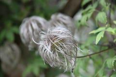 Pluizige bloem Stock Foto's