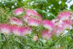 Pluizige bloemen op een groene close-up als achtergrond Stock Afbeeldingen