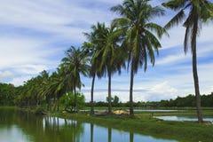 Pluizige cocopalm tussen twee vijvers Rijstpeddels en palmen royalty-vrije stock afbeeldingen
