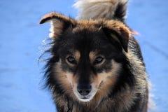 Pluizige hond in de zon tegen blauwe sneeuwachtergrond royalty-vrije stock afbeelding