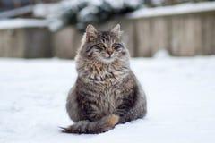 Pluizige kat royalty-vrije stock foto
