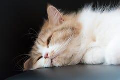 Pluizige kat die in slaap vallen Stock Fotografie