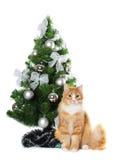 Pluizige kat onder boom Cristmas die op wit wordt geïsoleerd Stock Fotografie