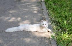 Pluizige kat op de stoep Stock Foto's